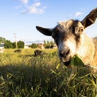 Photo taken at The Belmont Goats by The Belmont Goats on 7/1/2013