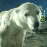 Photo taken at Polar Bear Museum by すーさんぱぱ on 8/14/2012