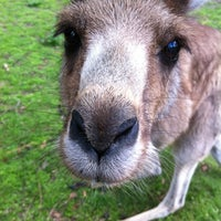 Photo taken at Lone Pine Koala Sanctuary by Nicholas P. on 7/21/2012