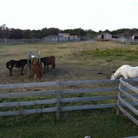 Photo taken at Ocracoke Pony Pasture by Ingrid K. on 11/10/2011