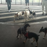 Photo taken at East River Esplanade South Dog Run by Antoinette on 8/13/2011