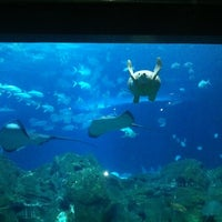 Photo taken at Adventure Aquarium by Kelly H. on 5/9/2011