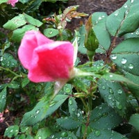 Photo taken at Pam's Knock Out Rose Garden by Pam H. on 9/21/2011