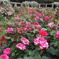Photo taken at Raleigh Rose Garden by Shari D. on 5/8/2011