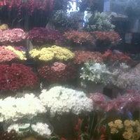 Photo taken at Trafalgar Place Flower Market by Travel Junkie on 4/2/2011