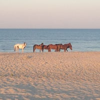 Photo taken at Assateague Island National Seashore (Maryland) by Chelsea F. on 6/10/2012
