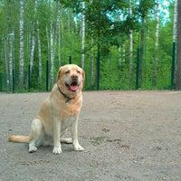 Photo taken at Viherlaakson koirapuisto by Jaakko R. on 6/29/2012