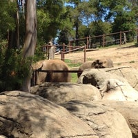 Photo taken at African Elephants by Christine I. on 4/21/2012