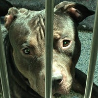 Photo taken at MSPCA Adoption Center by Dan on 8/4/2012
