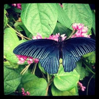 Photo taken at Butterfly Pavilion by Dhyana C. on 8/6/2012