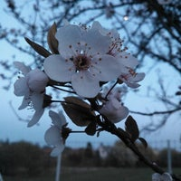 Photo taken at Vincotech by Attila B. on 4/3/2012