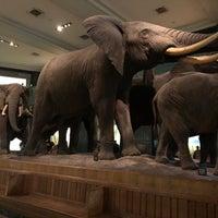 Снимок сделан в American Museum of Natural History Store пользователем Ricardo L. 3/9/2018