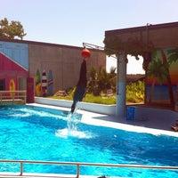 Photo taken at Sea Lion Show by Aubrey L. on 6/7/2013