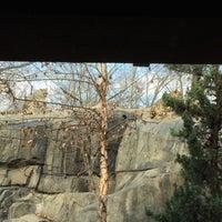 12/30/2016 tarihinde Ben M.ziyaretçi tarafından Central Park Zoo - Snow Leopard'de çekilen fotoğraf
