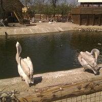 Photo taken at Бердянскийй зоопарк Кальченко by Andrey S. on 5/3/2013