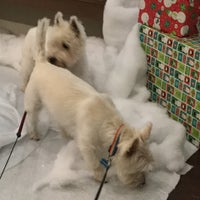 Foto scattata a Montrose Veterinary Clinic da David P. il 12/15/2016