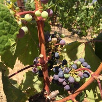 Photo taken at Trinitas Cellars by Alicia R. on 8/1/2017 & Trinitas Cellars - Winery