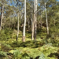 Photo taken at Blue Gum Tree Bush Walk by toni on 10/12/2013