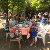 5/13/2018에 Kezban Ç.님이 Nallı Bahçe At Çifliği에서 찍은 사진