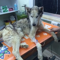 Photo taken at Petrium Veterinary Clinic by Kaila Nova on 5/31/2015