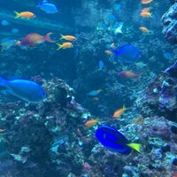 Photo taken at Sealife Centre by Alethea F. on 7/11/2017