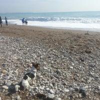 12/26/2013 tarihinde Kübra S.ziyaretçi tarafından Sea Life Resort Beach'de çekilen fotoğraf