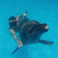 Photo taken at Cabo Dolphins by Aaron S. on 8/20/2013