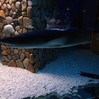 Photo taken at Музей истории аквариумистики by Рустам Х. on 3/17/2015