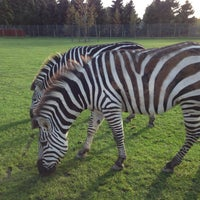 Photo taken at Blair Drummond Safari Park by Jennifer F. on 10/18/2014