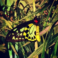 Photo taken at The Butterfly Conservatory at the American Museum of Natural History by Mary Elise Chavez on 4/23/2013
