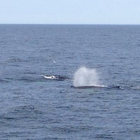 Photo taken at Boston Harbor Whale Watch by Jyoti K. on 7/5/2014