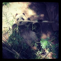 Photo taken at Giant Panda Research Station by Michael B. on 9/27/2014