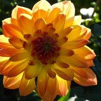 Photo taken at Toledo Botanical Garden by Vicki G. on 10/8/2013