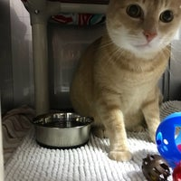 Photo taken at Emerald City Pet Rescue by Aafreen S. on 12/17/2017