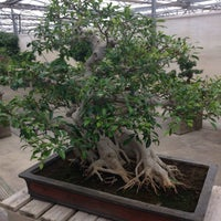 Photo taken at Mistral Bonsai by Juan Pablo R. on 5/18/2016