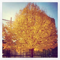 Photo taken at William Sheridan Playground by Peter D. on 11/2/2013
