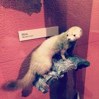 Photo taken at Exhibit Museum of Natural History by Alessandro G. on 4/27/2014