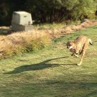 2/18/2013 tarihinde Olivier P.ziyaretçi tarafından Cheetah Run'de çekilen fotoğraf