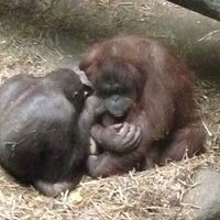 Photo taken at Tropical Forest Primates Of The World by Billy S. on 5/23/2016