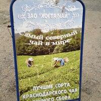 Photo taken at ЗАО Хоста-Чай by Наталья on 8/17/2013