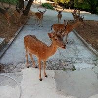 Photo taken at Brijuni National Park by Apartmani T. on 8/6/2015