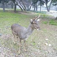 Photo taken at Brijuni National Park by Apartmani T. on 2/4/2016