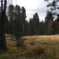 Photo taken at Giant Trees Meadow by Maria A. on 10/13/2016