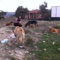 Photo taken at Balat Atatürk Ormanı by Nilay P. on 10/16/2013