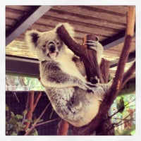Photo taken at Lone Pine Koala Sanctuary by Luca G. on 8/15/2013