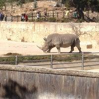 Photo taken at San Antonio Zoo by Michael α. on 3/16/2013