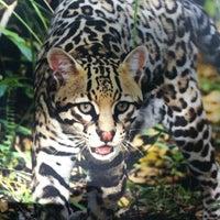 Photo taken at Orange County Zoo by Patrick F. on 3/17/2013
