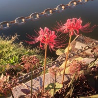 Photo taken at Magnolia Bridge by Editor B. on 10/23/2014