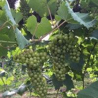 Photo taken at StarView Vineyards by Regina M. on 7/21/2015