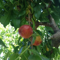 Photo taken at Bacchini's Fruit Tree by Si C. on 6/14/2014